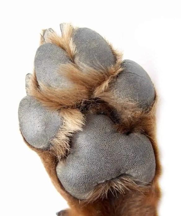 Dog claws