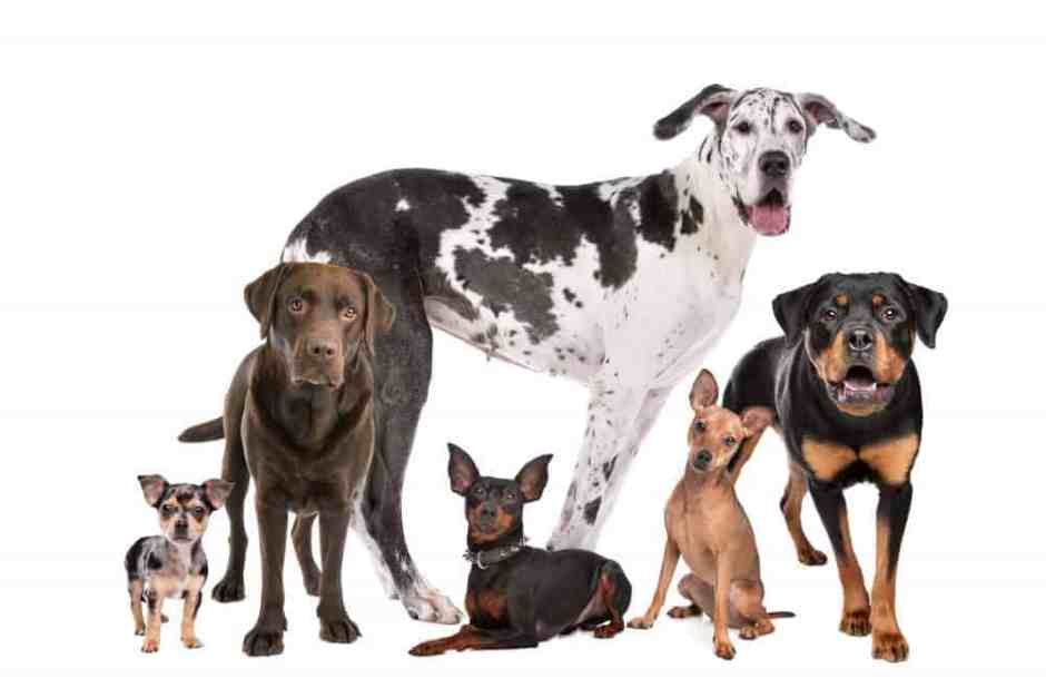 Large group of dogs in front of a white background