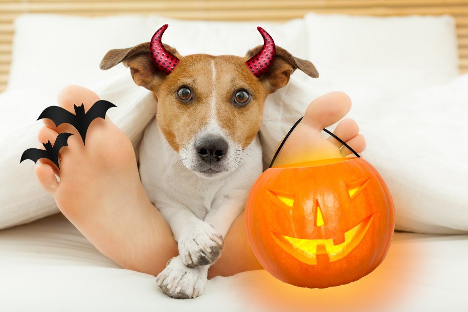 devil dog for halloween with owner