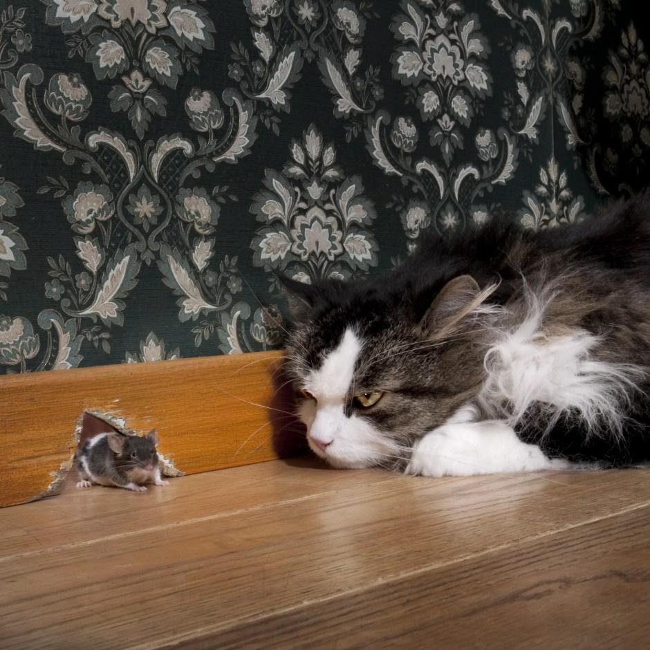 how cats hunt