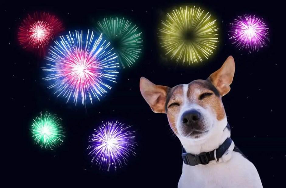 dog fireworks fears