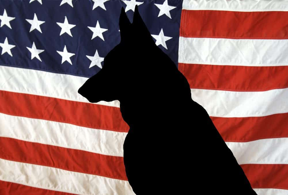 dogs of September 11