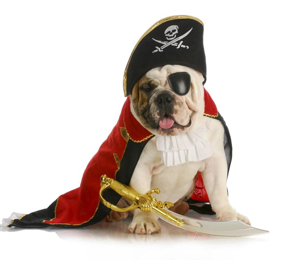 dog costume pirate