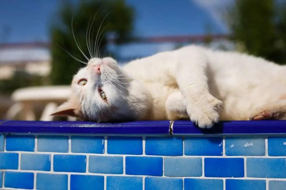 cat sunburn