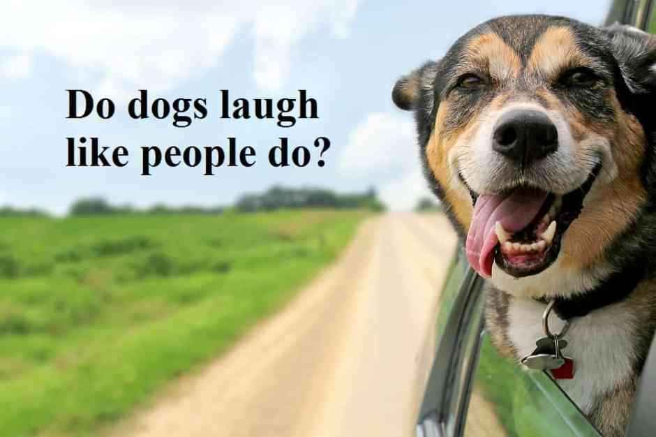 dog laughter