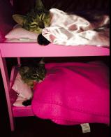 Kitty bunks