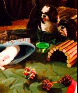 Boogie and Ollie keep an eye Darwin