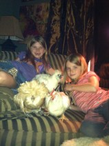 Chickens and TV