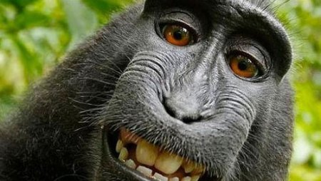Monkey-Selfie1