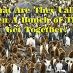 Collective Nouns – A Group of People, Animals and Things