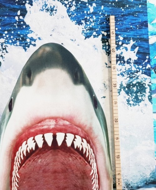 Jersey Rapport Shark-Attack