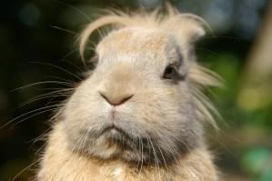 Thoughtful Bunny