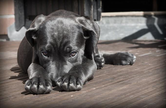 Embarrassed puppy to illustrate shame of blogging mistakes.
