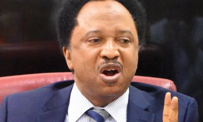 Kaduna Guber Tribunal: Shehu Sani Faults INEC's Choice Of Lawyer