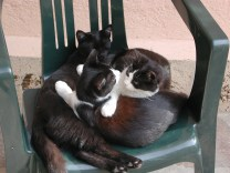 Umbrian cats