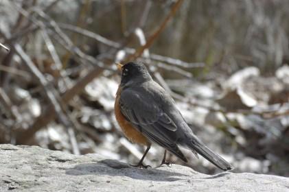 Toronto Islands birdlife