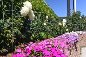 Floral sidewalk