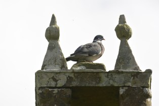 Bird on church roof