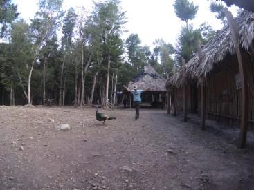 La Florida - chasing turkeys