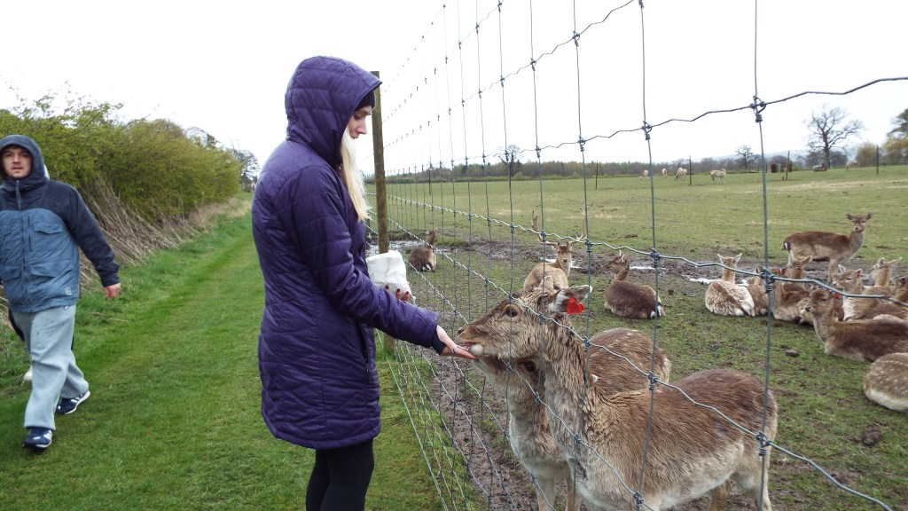 Making friends is easy at the Scottish Deer Centre
