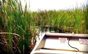 Airboat ride on Lake Toho