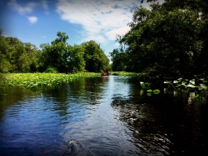 Canoeing the Wekiva River