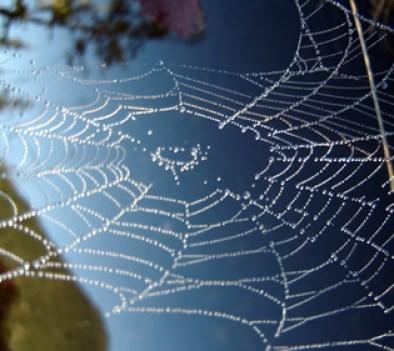 base_camps_spiderweb