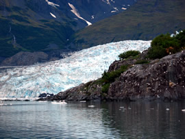 Shoup Glacier and bird colony