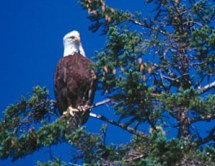 lodge_eco_eagle