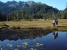 Prince William Sound rain forest