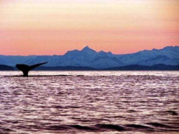 whale13