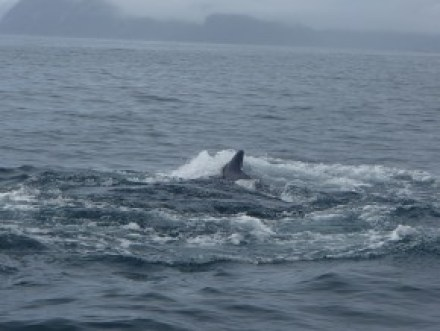 Humpback whale action!
