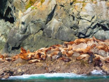 Sea Lions at their haul-out