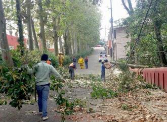 Pronta respuesta de Ayuntamiento de Xalapa a afectaciones por viento