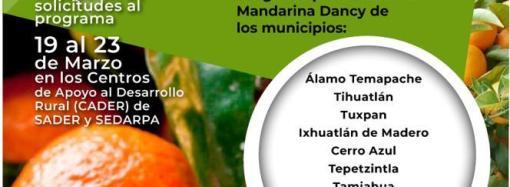 Abre SEDARPA ventanillas para productores de mandarina Dancy