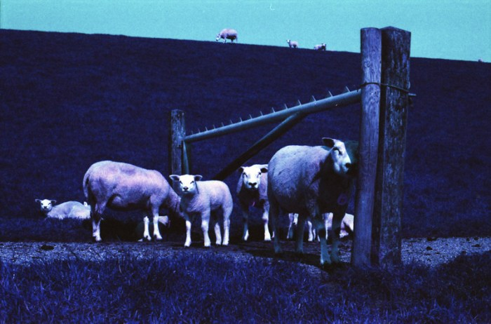 Lomochrome Purple Canon EOS 50E schapen