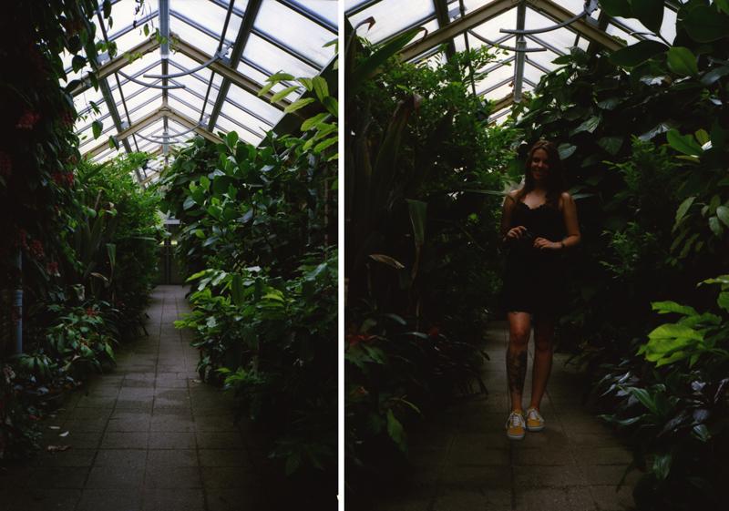 Hortus Botanicus Leiden, Minolta Hi-Matic AF2, Kodak Ultramax 400