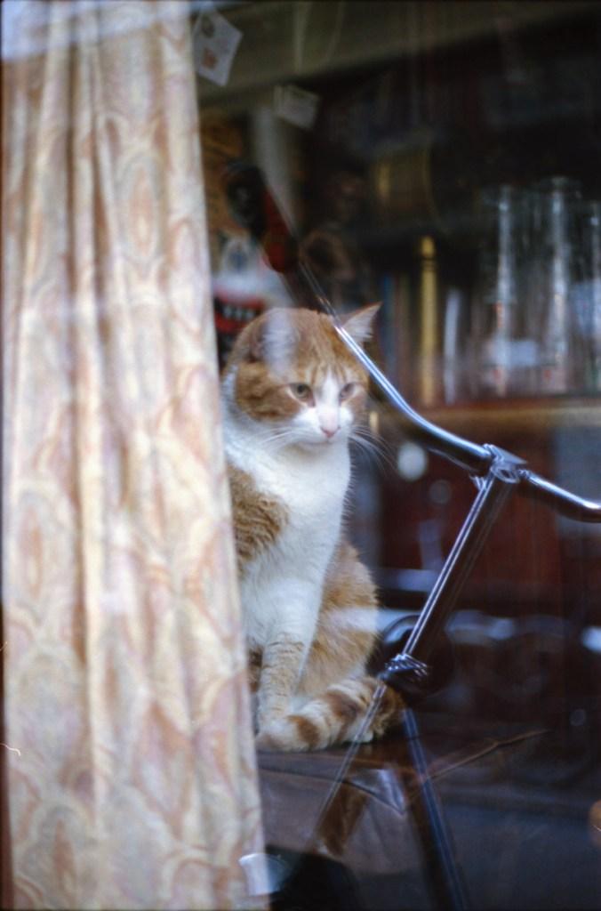 analoog, kodak portra 400, kat, poes, kat achter glas, poes achter glas, amsterdam, amsterdam cafekat