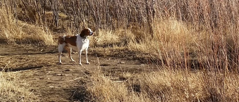 Cute pup after playing in Mosquito Lake