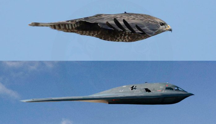 Biomimicry - Bird & Plane