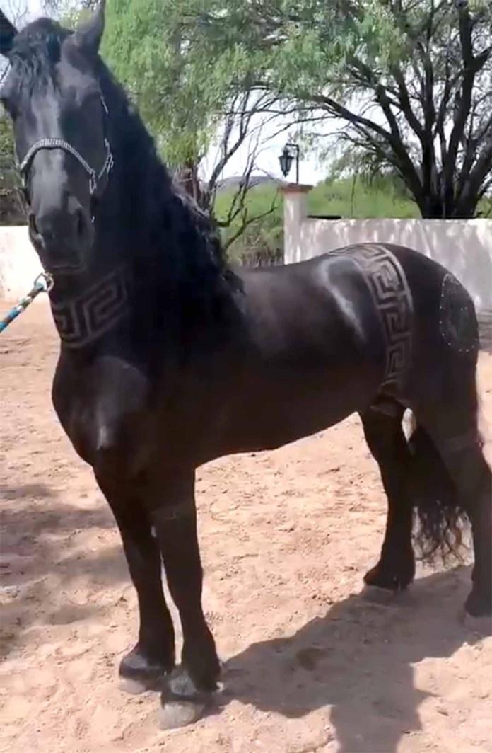 Miren cómo se ve este precioso animal con su corte