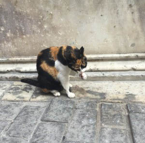 anamariapopa.com blog post turcia turkey istanbul stray cat 1