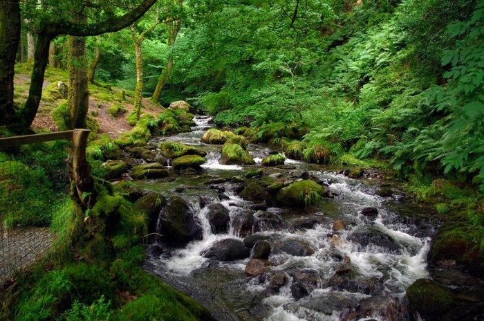 waterfall, forest, fern