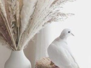 pure-dove