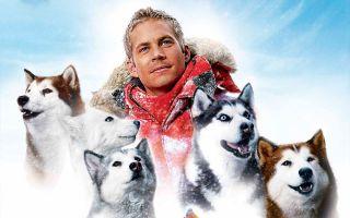 Best Dog Movies