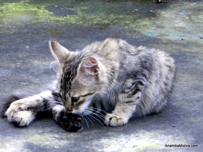 A Cat In My Hotel's Compound - PhotoBlog - Cat Photography