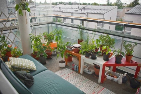 Which Kind Of Plants You Must Have In Your Balcony?