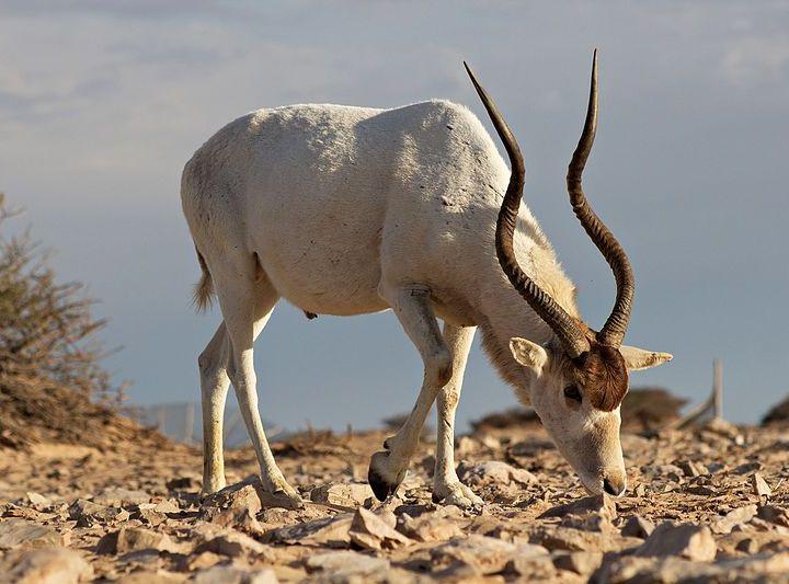 الحيوانات الوطنية لجميع الدول العربية