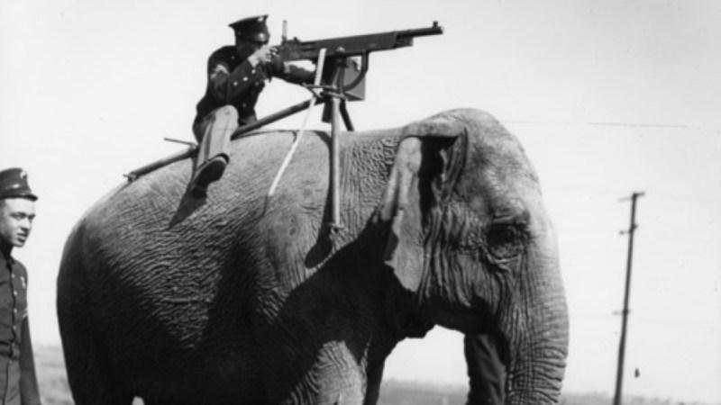 كم عدد الفيلة التي قتلت في الحرب العالمية الاولى