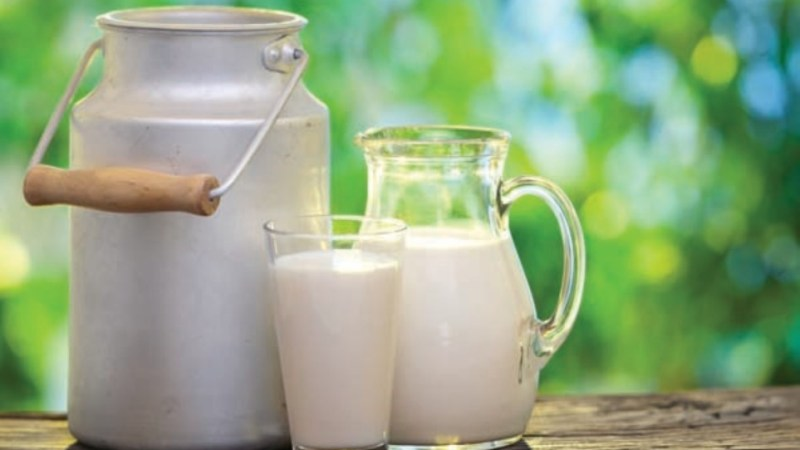 أكبر الدول المنتجة لحليب الخروف في العالم
